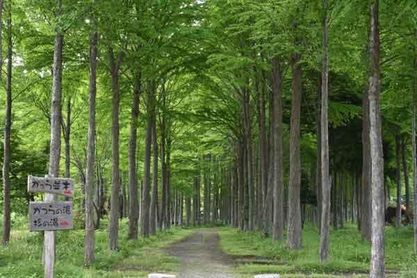 種から植えたというけやき並木