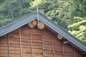 スズメバチの巣がいっぱい!