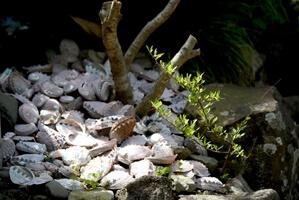 庭の土の上には貝殻がたくさん