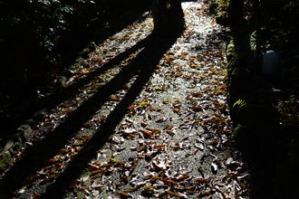 昨日落ちた落ち葉が道を埋め尽くす