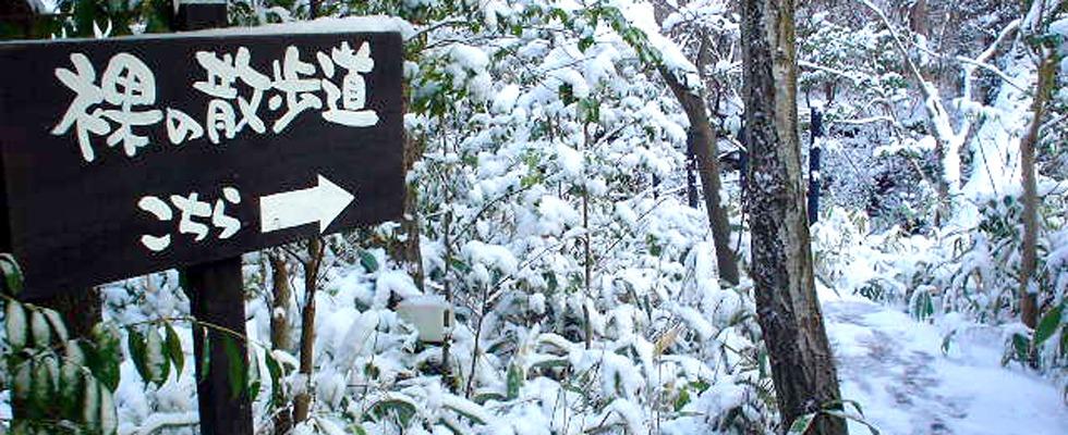 黒川温泉 山みずきイメージ