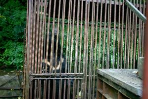 檻の中にはツキノワグマがいる